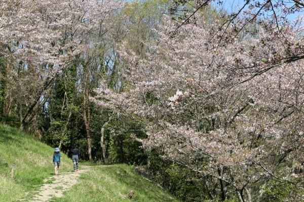 桜2009_1